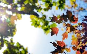 Картинка осень, небо, листья, солнце, макро, свет, colors
