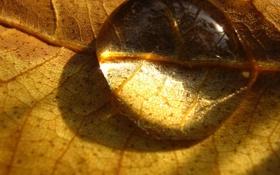 Картинка вода, фон, листок, капля