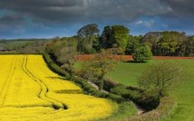 Картинка дорога, поле, трава, деревья, цветы