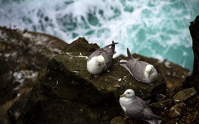 Картинка птицы, природа, камни