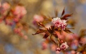 Обои листья, цветы, ветка, весна, цветение, wallpapers, spring