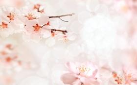Картинка природа, цветочки, цветение, nature, flowers, веточки, twigs