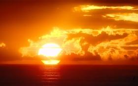 Картинка небо, вода, солнце, облака, закат, птицы, океан