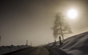 Картинка пейзаж, забор, дерево, зима, дорога, туман, природа