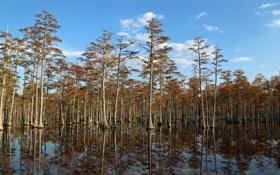Картинка лес, небо, вода, деревья