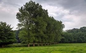 Картинка поле, лето, деревья, природа