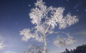 Картинка зима, иней, ночь, природа, снежное дерево