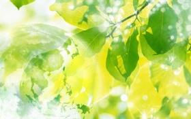 Обои листья, солнце, природа, весна
