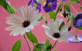 Картинка листья, растение, лепестки, природа, цветы