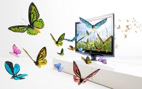 Картинка бабочки, крылья, экран, изображение