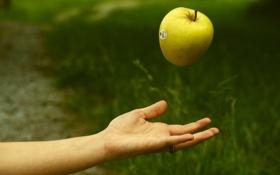 Картинка фон, яблоко, рука