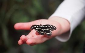 Обои бабочка, рука, крылья, насекомое, пальцы