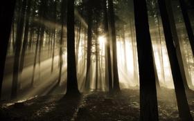 Картинка лес, свет, дримучий