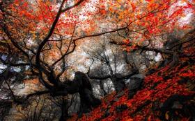 Обои осень, лес, листья, деревья, природа, парк, colors
