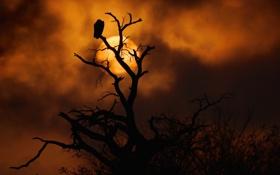 Обои закат, контраст, ветки, небо, солнце, оранжевый, птица