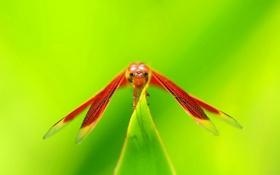 Картинка глаза, растение, крылья, голова, стрекоза, насекомое