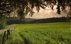 Обои природа, зелень, трава, деревья, фото