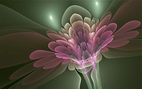 Обои цветок, линии, свечение, лепестки, стебель