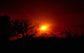 Обои небо, солнце, облака, деревья, закат, силуэт