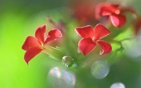 Обои цветок, растение, лепестки, соцветие