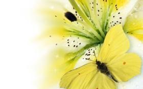 Обои цветок, бабочка, лилия, flower, butterfly, Lily