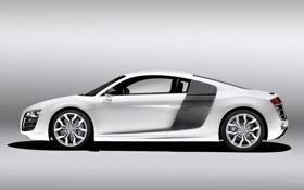 Обои Audi, Авто, Ауди, Белый, V10, Купэ, Спорткар