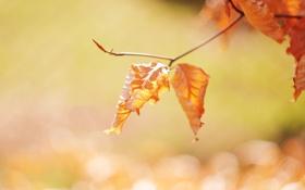 Картинка осень, листья, цвета, солнце, свет, блики, дерево