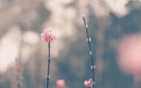 Обои ветка, лепестки, розовые