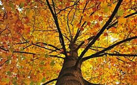Картинка природа, осень, листва, дерево