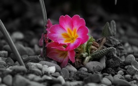 Обои цветы, камни, серое
