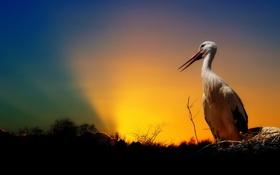 Картинка закат, птица, аист
