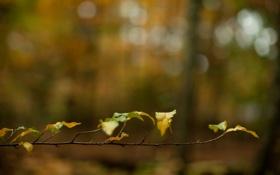 Обои листья, макро, ветки, природа, листок, ветка, листки