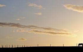 Картинка пейзаж, небо, свет, конь, минимализм