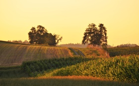 Обои поле, лето, природа, день
