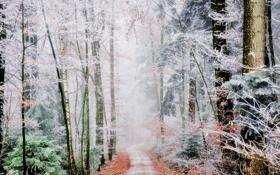 Обои иней, дорога, лес