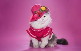 Обои пушистая, кошка, шляпка