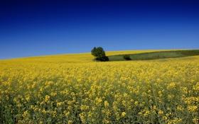 Обои пейзаж, поле, небо, лето