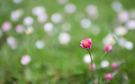Картинка цветок, поле, луг, трава