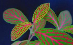 Картинка листья, линии, узор, растение, цвет