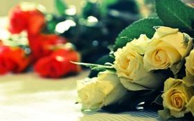 Картинка желтый, красный, розы, букет