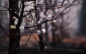Картинка цветы, ветки, дерево, весна, размытость, сад, цветение