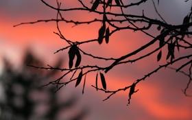 Обои осень, капли, закат, природа, голая, ветка