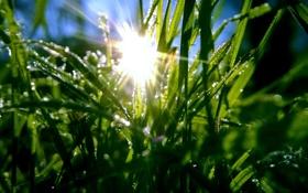Картинка трава, солнце, капли, green, grass, dew, frost