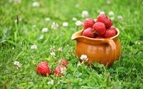 Картинка трава, ягоды, клубника, клевер, кувшин