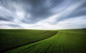 Картинка небо, тучи, ветер, поля, весна, зеленые, ковры