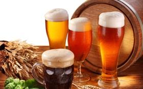 Картинка стол, пиво, бокалы, стаканы, светлое, бочонок, хмель