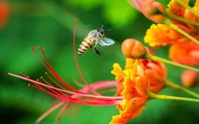 Обои зелень, цветы, нектар, пчела, фокус, насекомое