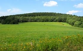 Картинка зелень, лес, небо, трава, облака, деревья, пейзаж