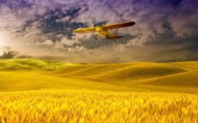 Картинка пшеница, поле, небо, облака, самолет
