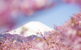 Картинка пейзаж, цветы, горы, природа, дерево, весна